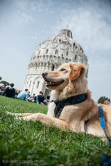 Pisa (I) (jr-teams.com - Photo) Tags: world italien italy dog chien pet heritage monument del nikon san italia outdoor unesco pisa hund tuscany historical piazza duomo nikkor toscana battistero afs giovanni baptistery weltkulturerbe toskana domplatz 24120 d700 baptisterum taufhaus hovawartmix 424120vrii