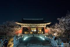 Seoul: Changgyeonggung Palace at Night (Seoul Korea) Tags: city beautiful night asian photo spring asia capital palace korea korean photograph seoul kr southkorea changgyeonggung    seoulkorea republicofkorea flickrseoul iseoulu