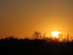00725622 Sunrise (golli43) Tags: sunset sun streets rain sunrise mond heaven himmel wolken april grün neighbours sonne katzen nachbarn homesweethome regen wetter spaziergänge magnolie streetlive