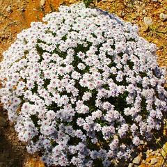 Ramo (Manel) Tags: flores ramo