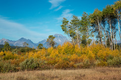 Fall Color - Grand Teton NP, WY, September, 2015 (Norm Powell (napowell30d)) Tags: travel mountain mountains landscape landscapes nationalpark nps fineart wyoming nationalparks grandtetonnationalpark jacksonlakelodge