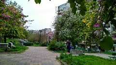 حديقة الأشرفية (nesreensahi) Tags: park flowers trees sky nature landscape syria siria سوريا syrie latakia اللاذقية سورية