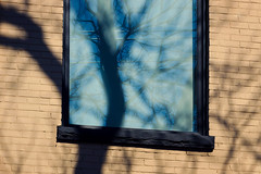 Reflections and Shadows (JeffStewartPhotos) Tags: shadow toronto ontario canada reflection tree window wall reflections shadows photowalk parkdale torontophotowalk topw torontophotowalks topwpkdl