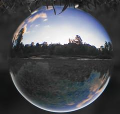 IMG_9324-3.jpg (tastigr) Tags: autumn fall afternoon australia melbourne victoria botanic botanicgardens crystalball canon70d