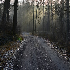 A misty November morning in forest (Salmi recreation area, Vihti, 20151129) (RainoL) Tags: road november winter mist fog forest finland geotagged fin uusimaa 2015 nyland salmi vihti vichtis 201511 salmenulkoilualue salmirecreationarea 20151129 geo:lat=6036011652 geo:lon=2450309623