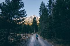 Stroll (tomaszhsk) Tags: travel mountain mountains alps clouds forest landscape outdoors austria tirol sunny wideangle hike tokina adventure explore planetearth aov artofvisuals