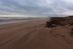Blowing Sand,Sands of St Cyrus,St Cyrus National Nature Reserve_jan 16_680 (Alan Longmuir.) Tags: aberdeenshire grampian blowingsand stcyrus shiftingsands sandsofstcyrus stcyrusnationalnaturereserve