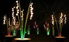Christmas at Kew Gardens (pjw58) Tags: christmas kewgardens kew christmaslights kewgardenslondon