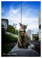 wink (deslee74) Tags: leica cat yahoo google singapore flickr 28mm wink elmarit m240