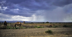 ETHIOPIA LANDSCAPE 3781 (opaxir) Tags: africa landscape dromedary ethiopia