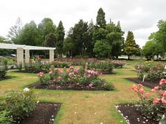 Murray Linton Rose Garden