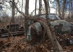 DSC08580.ARW-01 (juice95m3) Tags: abandoned rust vintagecar automobile junkyard oldcars classiccars