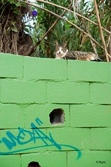 Kitty (Kym.) Tags: green cat fence walking spain walk kitty andalusia nerja andalucia otherpeoplesgang