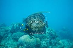NE_Abrolhos0039 (Visit Brasil) Tags: horizontal brasil fauna natureza bahia nordeste detalhe externa abrolhos semgente subaqutica diurna
