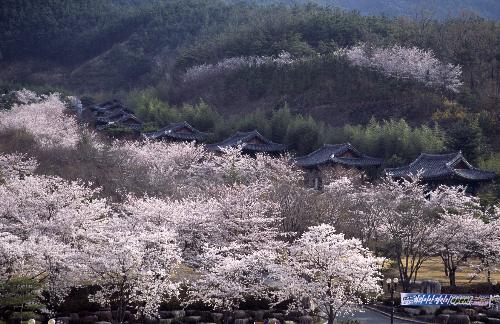 Du xuân ở Nhật - Hàn