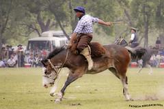 Jineteada 3_1 (pniselba) Tags: horse criollo caballo buenosaires gaucho tradicion provinciadebuenosaires sanantoniodeareco areco jineteada diadelatradicion