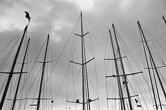 Mastiles (Campanero Rumbero) Tags: trip travel summer france monocromo day barcos cannes dia bn verano turismo francia yates mastiles