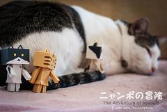 01 (= ann =) Tags: cat toy photostory yotsuba danbo danboard nyanboard