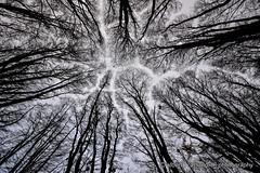 Lights through the trees (Alberto Cassandro) Tags: trees patagonia mountains water argentina tierradelfuego ushuaia nationalpark nikon 2015 sigmalenses trendelfindelmundo d5200 reflexphotography albertocassandrophotography