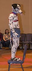 DSC_2885 (Acrufox) Tags: chicago illinois furry midwest december ohare rosemont convention hyatt regency 2014 fursuit furfest fursuiting acrufox mff2014