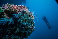 NE_Abrolhos0021 (Visit Brasil) Tags: horizontal brasil natureza mergulho bahia esporte nordeste aventura externa abrolhos subaqutica comgente diurna