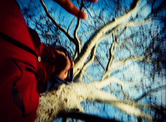 messed up (.grux.) Tags: sky toronto tree 120 film up mediumformat xpro crossprocessed 645 plasticfantastic expiredfilm debonair messedup fpp fujichromems1001000 zonefocus