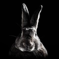 Solemn Bunny (Jeric Santiago) Tags: summer pet rabbit bunny animal conejo lapin hase kaninchen   winterrabbit