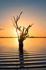 Lake Bonney Sunset (RayWarrenPhoto) Tags: travel sunset lake tree bird water birds silhouette river pier ray all jetty c south australia rights warren southaustralia murray reserved bonney 2016 riverland barmera lakebonney murraylands wwwraywarrenphotocom