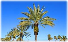 Northshore Park - St Petersburg, Florida (lagergrenjan) Tags: park beach st palms florida north petersburg shore