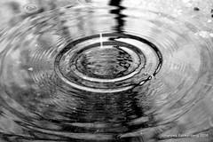 Wassertropfen (grafenhans) Tags: white black macro wasser sony alpha makro tamron weiss schwarz tropfen pftze a700 2590 alpha700 grafenwald