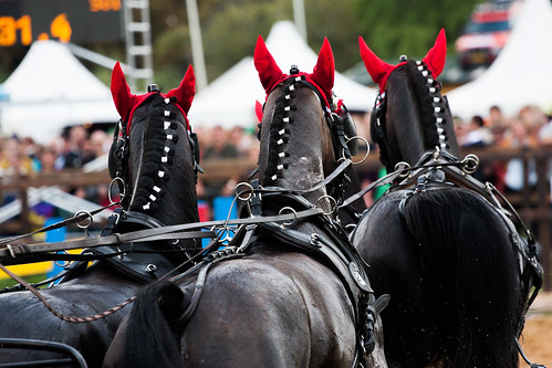 Horses Insight  (7)