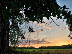 Day 309. Had to do some trespassing for a spot to sleep last night. I set up behind this tree and as the sun was setting a family pulled onto the land in their Gator. I walked up to them and told them my story, that I was only looking for a safe place to