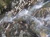 2016.02.21_OlhosAgua_Alcanena_1920x_056 (PatricioDomingues) Tags: portugal water água olhosdeagua alviela 20160221