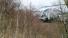 Peruica Primeval Forest during winter in Sutjeska National Park, Bosnia & Herzegovina (Terekhova) Tags: trees winter snow forest bosnia primeval