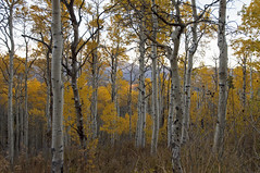 FALL (Hunter Page Photography) Tags: fall nature beautiful landscape utah photographer seasons hiking hike uta leafs natuer naturelandscape utahphotographer utahphotography