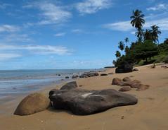 Japaratinga Beach (Luiz Carlos Targino Dantas) Tags: praia beach canon al alagoas g12 japaratinga canong12 praiadejaparatinga