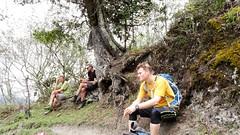 Colombian Pine