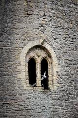 Pembroke Castle (Simon Clare Photography) Tags: trip travel colour brick tower castle window nature wales digital easter pembroke march spring movement nikon day pigeon pigeons visit welsh pembrokeshire timing pembrokecastle simonclare d7200 simoncphotography sclarephoto