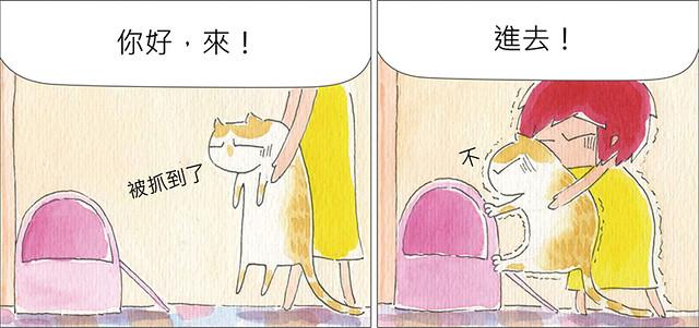 家裡來了一隻貓 一對一單挑