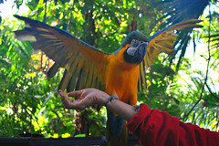 Key West (Florida) Trip 2015 0287Ri 4x6 (edgarandron - Busy!) Tags: bird birds keys florida parrot keywest cockatoo macaw floridakeys nancyforrester