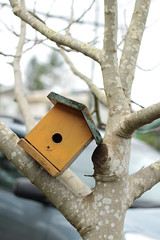 A balancing act (annapolis_rose) Tags: winter tree vancouver birdhouse