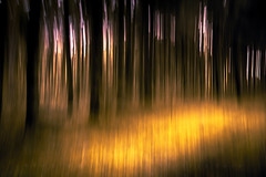 My second ICM-Photography (matthiasstiefel) Tags: trees sun abstract forest painting surreal trunks sonne wald bume abstrakt ics baumstmme gemlde lichtung internationalcameramovement samyang12mmf2