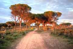 forest in gambelas (Marek K. Misztal) Tags: portugal forest faro evening algarve hdr portugalia gambelas
