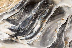 20160419-00009 (Stay-Focussed) Tags: uk abstract beach shell april mussel submission roker 2016 beachtreasure rokerbeach april2016 20160419