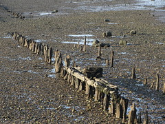 Whitstable (Dubris) Tags: england coast kent seaside lowtide whitstable