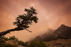 Lonely tree (beaugraph) Tags: cloud mist mountains tree argentina zeiss sunrise landscape twisted lonetree mountfitzroy lagunatorres