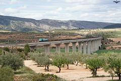 Transitia Rail en el Viaducto de Fosino (lagunadani) Tags: puente paisaje nubes olivos teco rambla viaducto 335 fontdelafiguera sonya7 corredormediterraneo transitiarail fosino