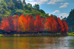 Lago So Bernardo (Rohdrygo) Tags: brazil lake water beautiful rio brasil de lago grande francisco do day paula bernardo so sul