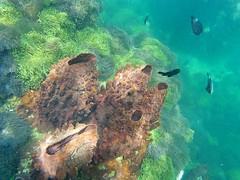 Chumphon, Thailand (ploynatchana) Tags: sea fish water beautiful coral thailand underwater snorkel snorkeling seaanemone chumphon sjcam sj4000wifi
