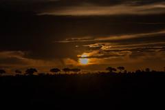 untitled (271 of 392).jpg (Oddshots) Tags: nature animals southafrica krugerpark